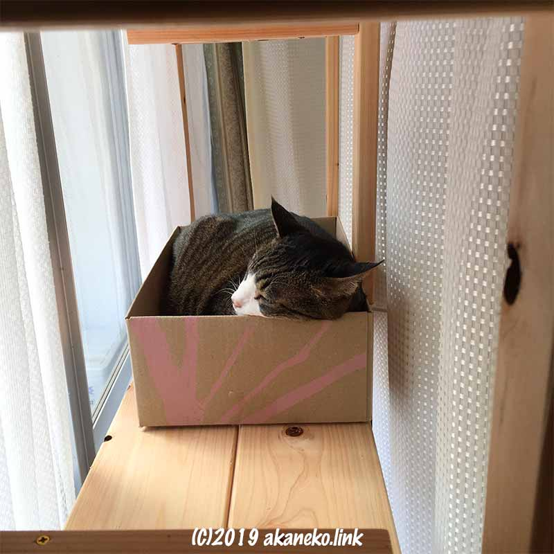 フェリシモの箱の中でくつろぐ猫