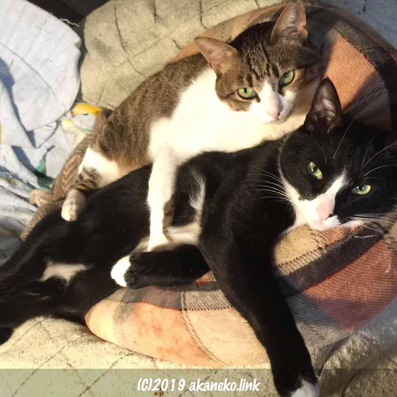 しがみついて寝ている2匹の猫