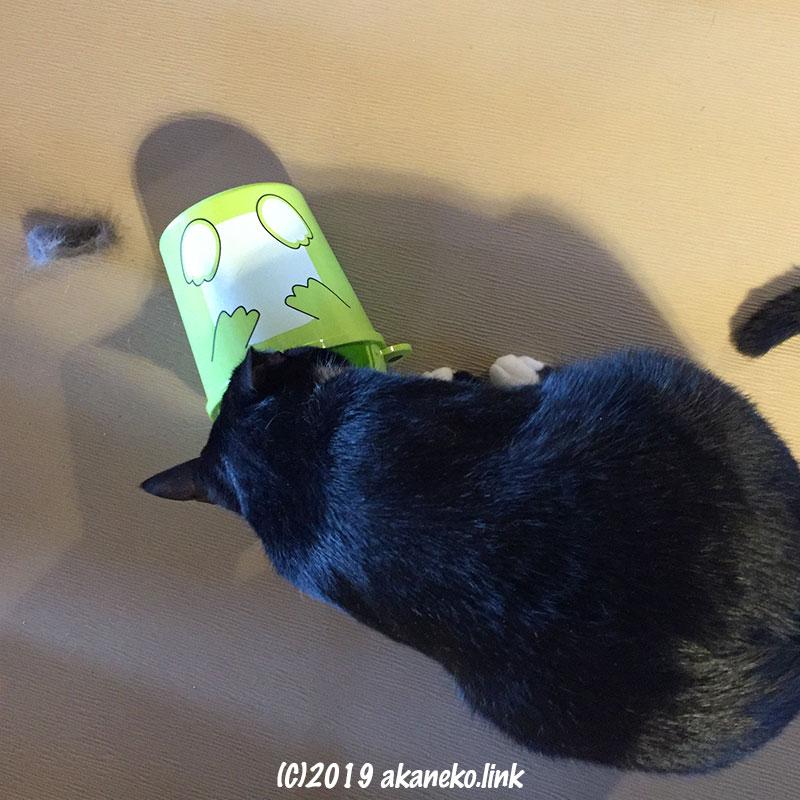 ゴミ箱を漁る猫の背中