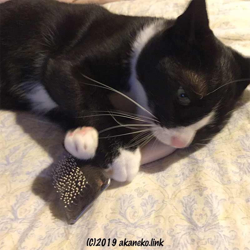 スリッカーブラシをかじる猫