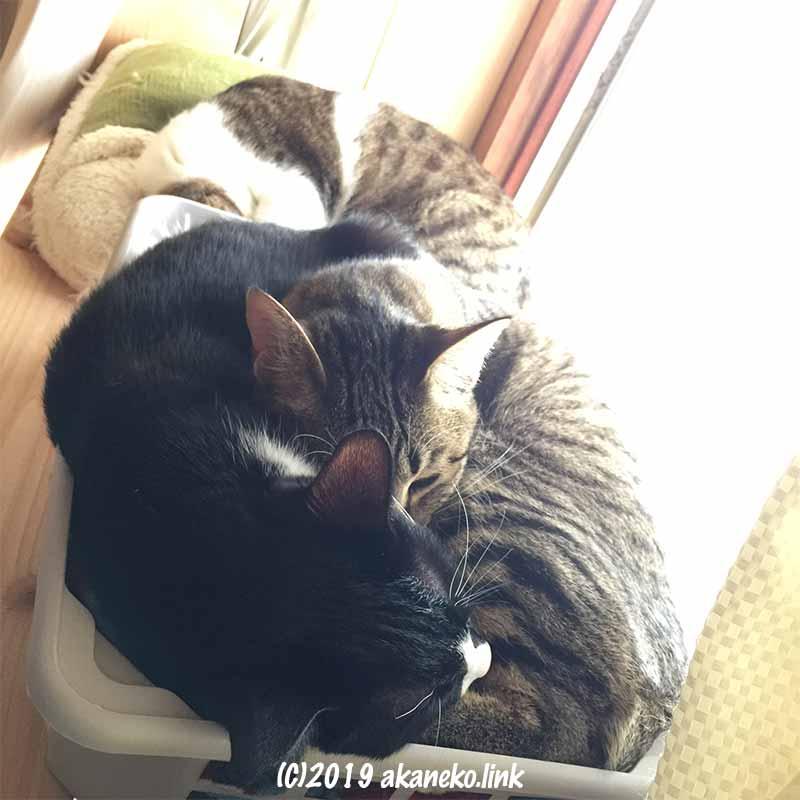 ダイソーの積み重ねられるバスケットの中に重なって眠る2匹の猫