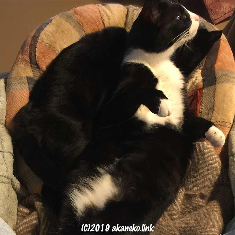 猫ベッドの中の2匹の猫