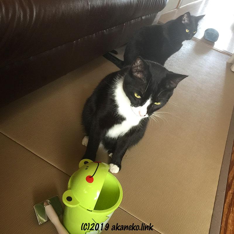 カエルのゴミ箱とスリッカーブラシと2匹の猫