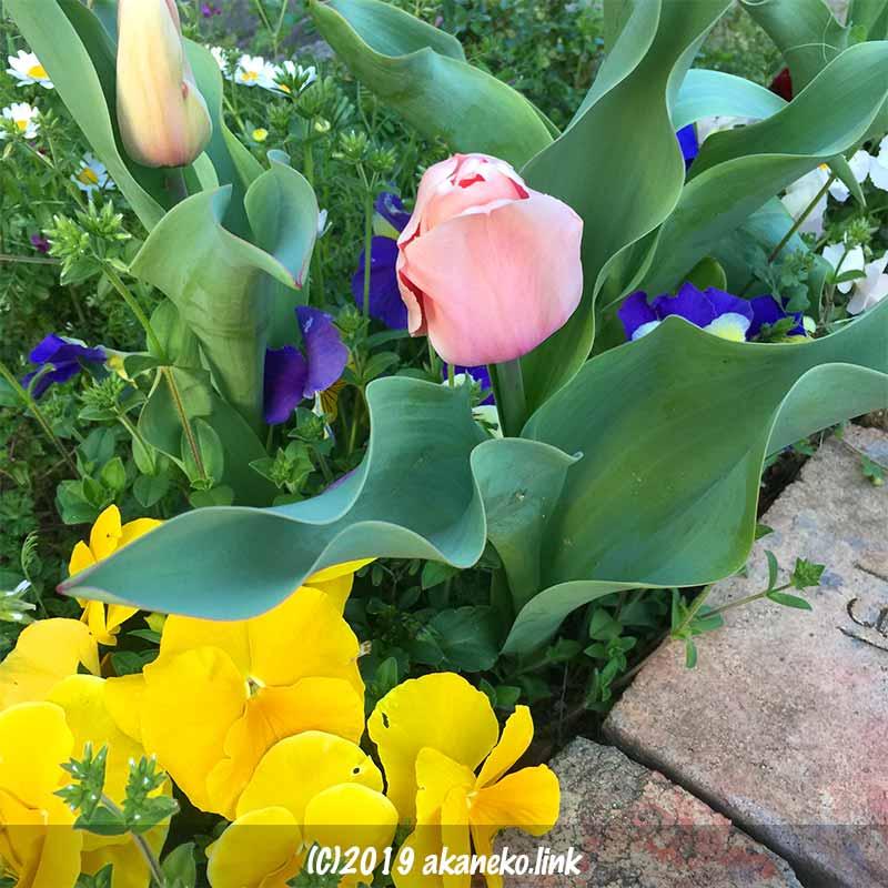 野草と黄色いパンジーとピンクのチューリップ
