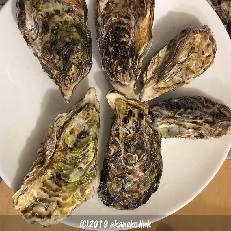 白い皿に並べられた殻付きの牡蠣