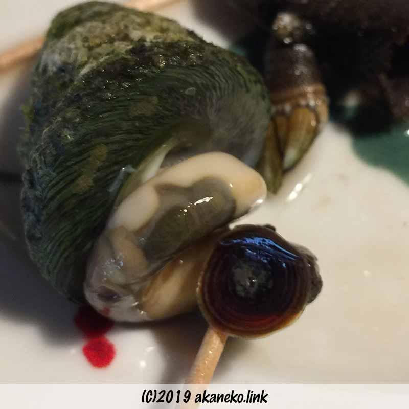 塩茹でした巻貝「にいな」の身を爪楊枝で取り出す