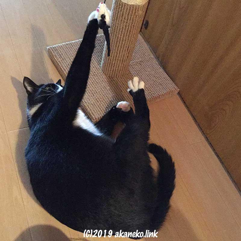 寝転がって「どこでもツメとぎタワーS」で遊ぶ白黒猫