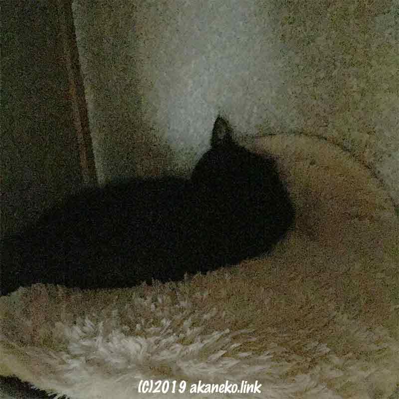 空の仏壇スペースの暗がりで寝ている黒猫