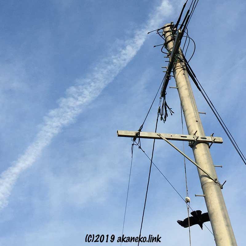 青空と電柱と飛び立つカラス