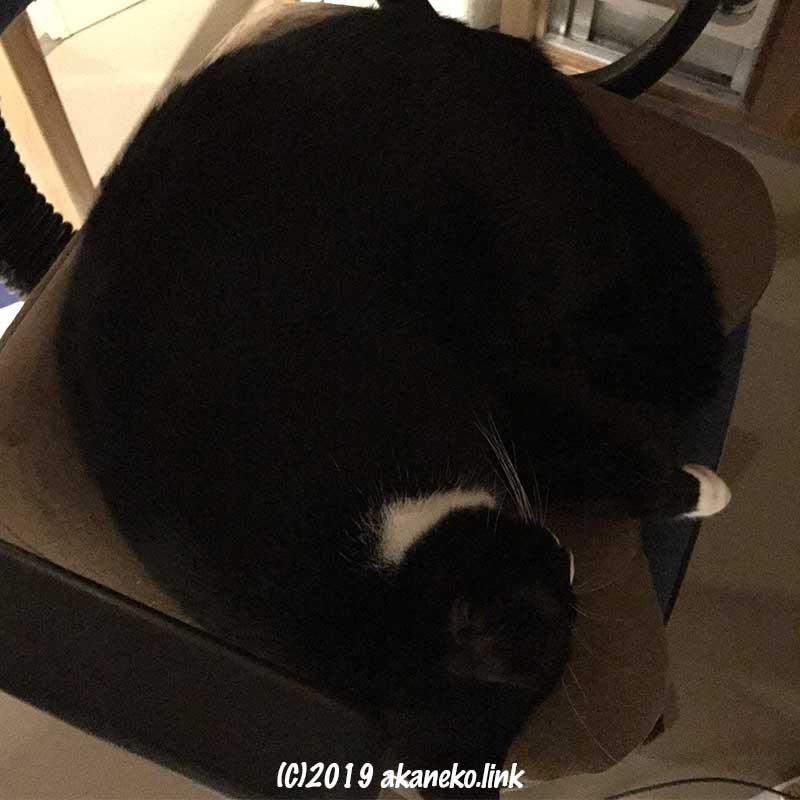 椅子の座面を占領して寝ている猫