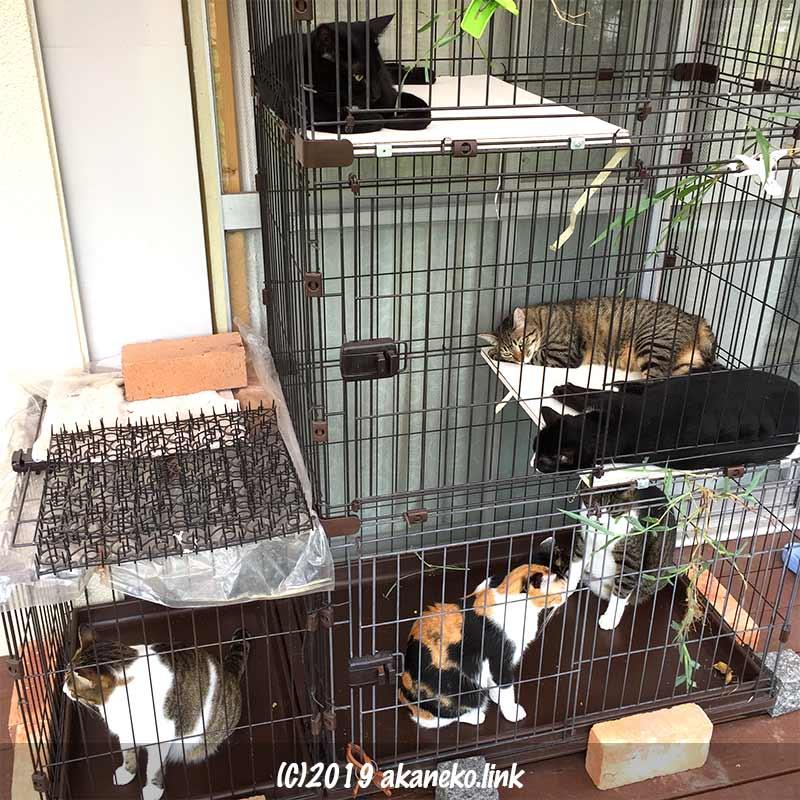 外ケージの中の6匹の猫
