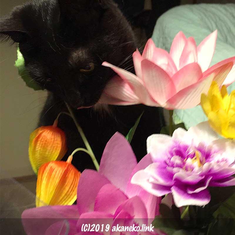 お盆の造花をチェックする黒猫
