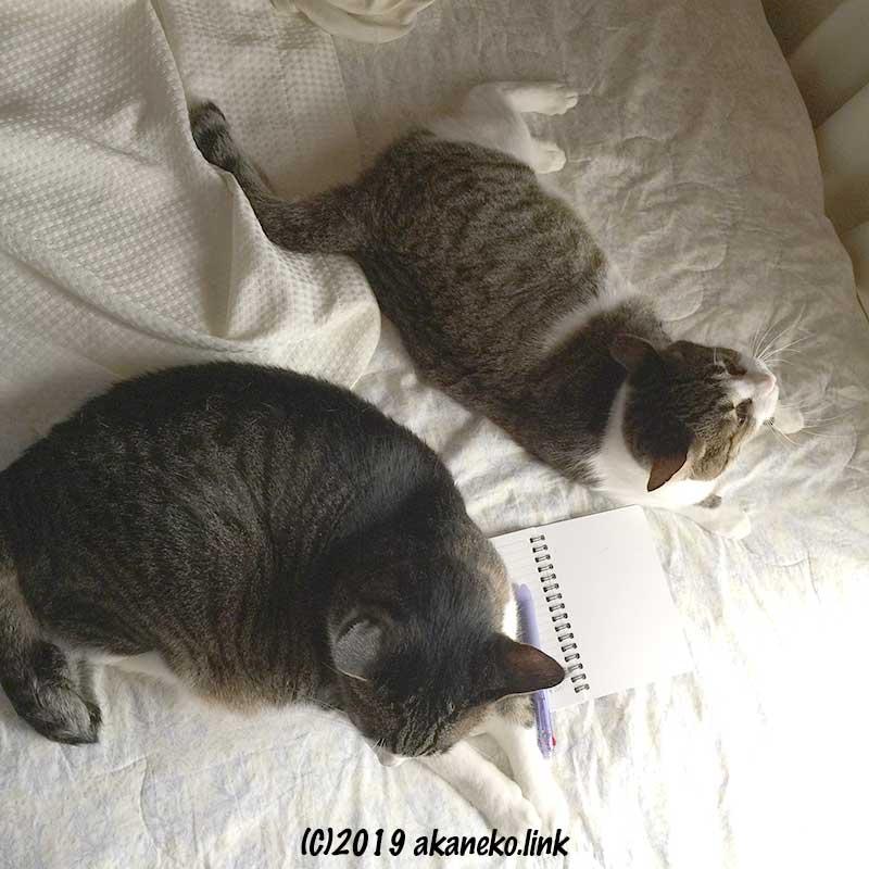 ベッドの上の2匹の猫