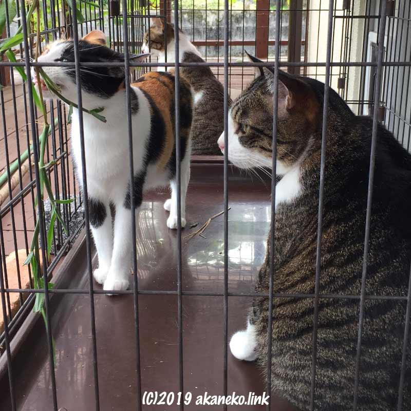 ケージの中で草を食べる猫たち