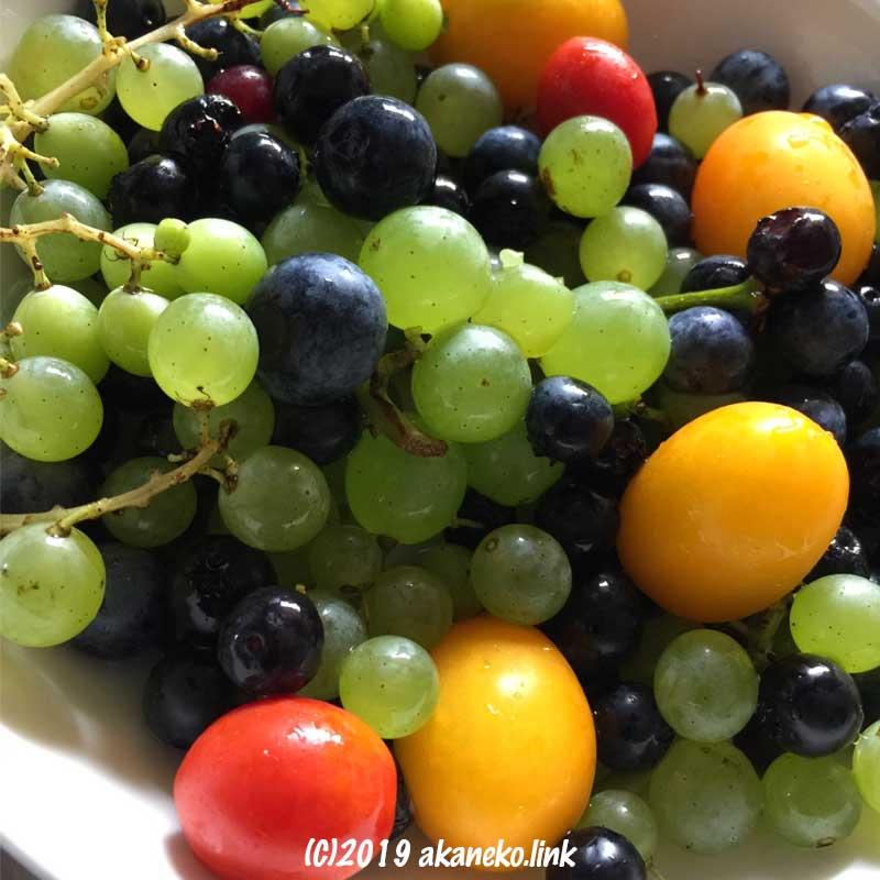 ミニトマトとぶどうとブルーベリーの彩り
