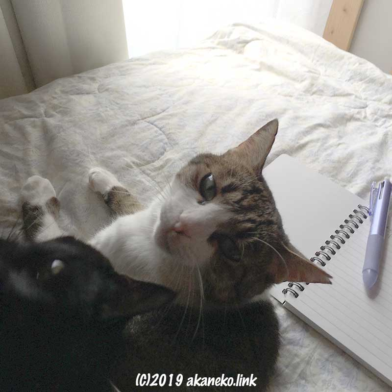 広げたノートとペンと振り向く2匹の猫の顔