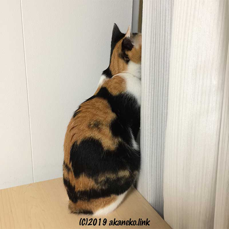 カーテンの隙間から外を覗く三毛猫の後ろ姿