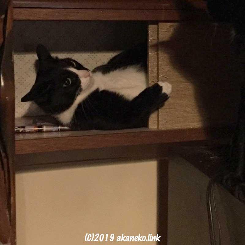 床の間の中袋の中に寝そべる猫