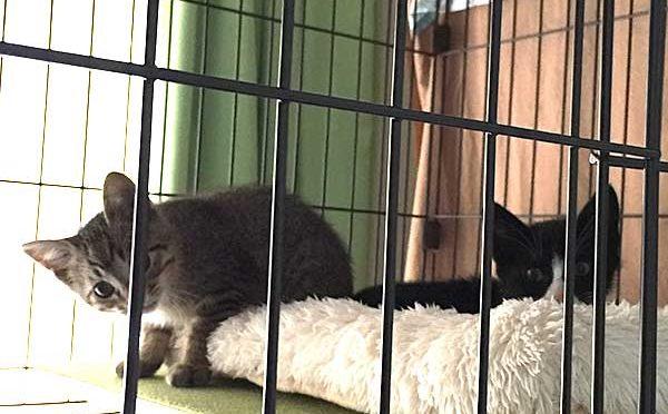 母猫1匹+子猫4匹を捕まえた(野良猫母子、家猫化計画その1)