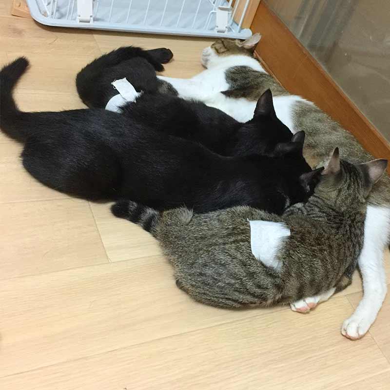授乳中のキコ