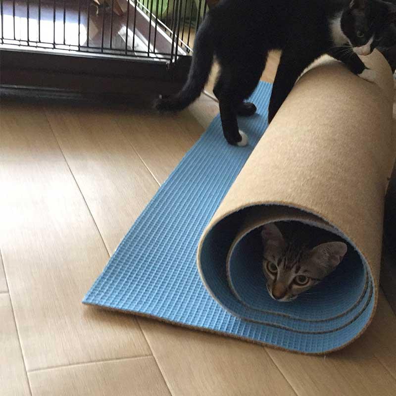 トンネル好きな子猫