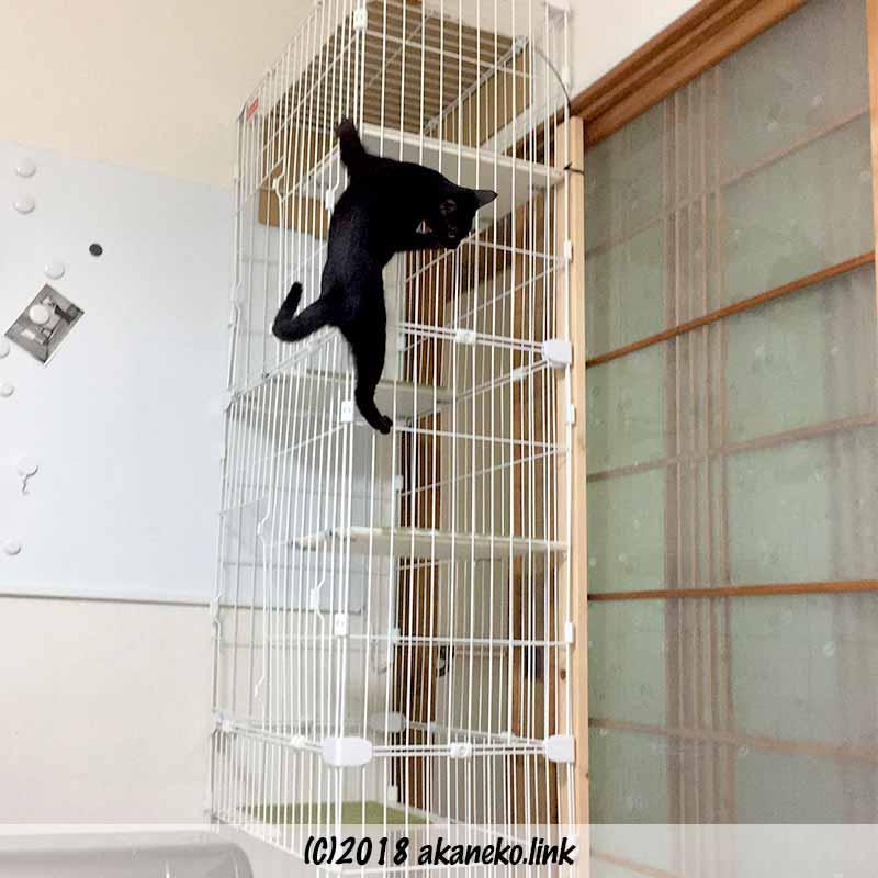 キャットケージをつたい降りる黒い子猫