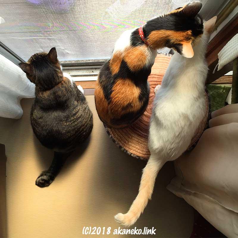 網戸の近くの3匹の猫