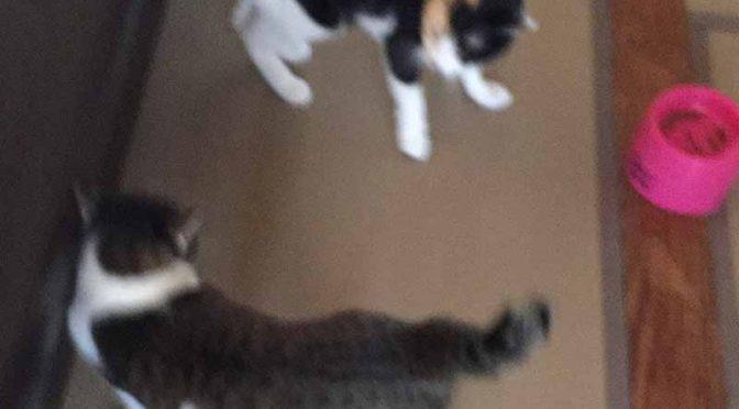 続・先住猫2匹vs.元野良猫4匹
