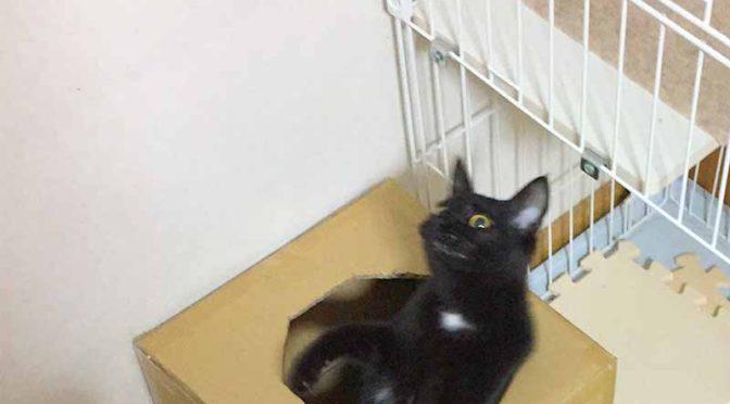 猫のサイコロ型ダンボールハウス