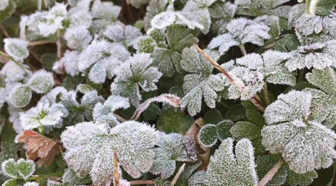 2019年1月4日見事な降霜である