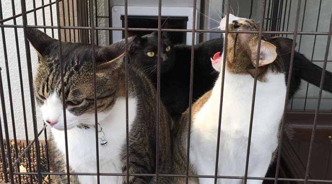 ケージの中の3匹の猫