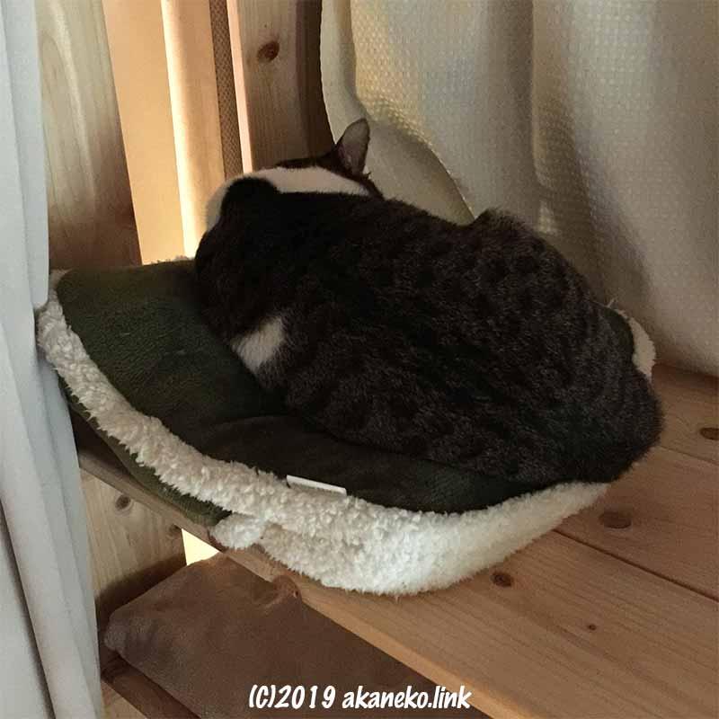 クッションに丸まって寝ている猫の背中