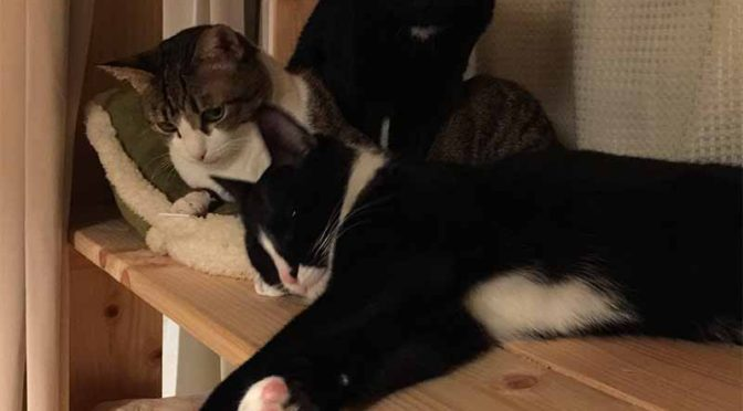 母猫卒業宣言後のB群