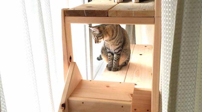 キャットウォークというよりは猫棚?