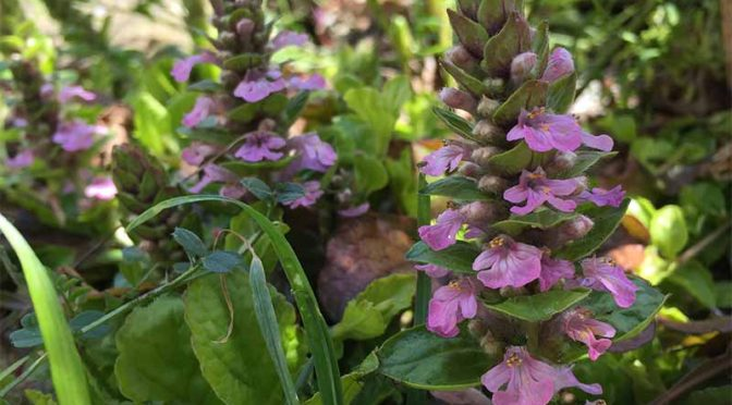植えっぱなしで大丈夫!寒さに強い常緑宿根草