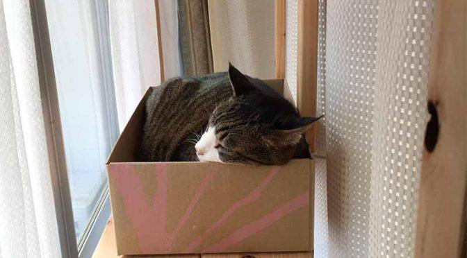 フェリシモのダンボール箱で猫ベッド
