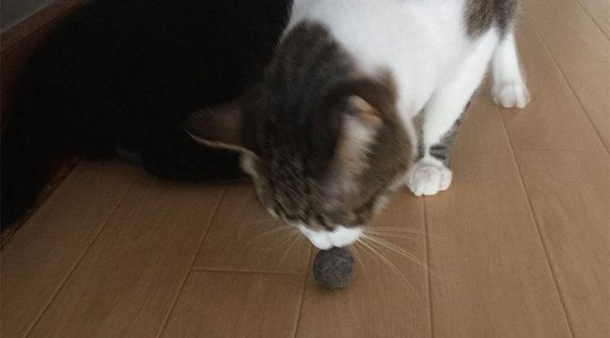 廊下で猫毛玉の匂いを嗅ぐ猫