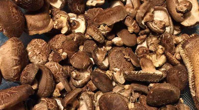 ザルいっぱいの頂き物の生椎茸