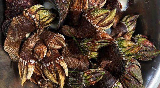 ステンレスボールの中の「亀の手(せい)」と「にいな貝」
