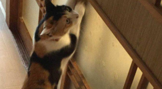 猫それぞれの爪とぎ