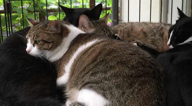 猫たちの昼寝:暑〜い夏日は家の中
