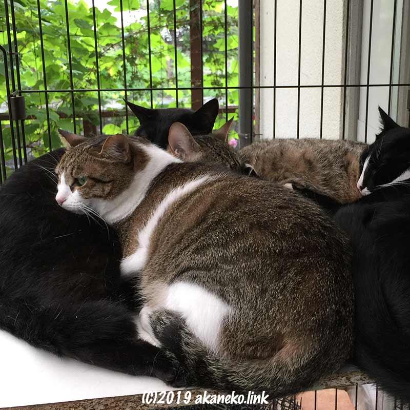 ケージの中で団子になってくつろいでいる4匹の猫