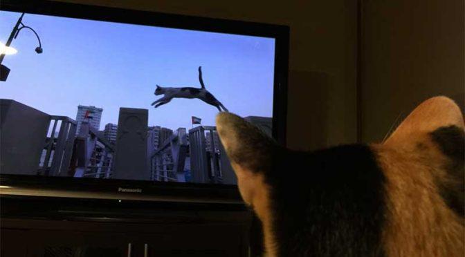 テレビ見る猫:「世界ネコ歩き」はみかんのお気に入り