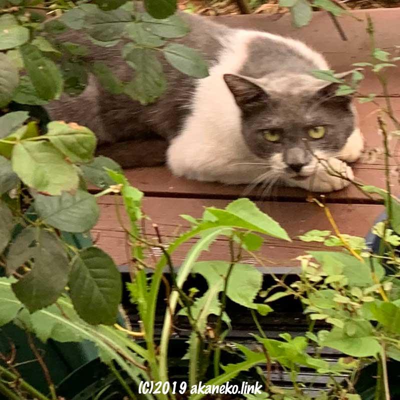 葉陰からこちらを見上げる猫