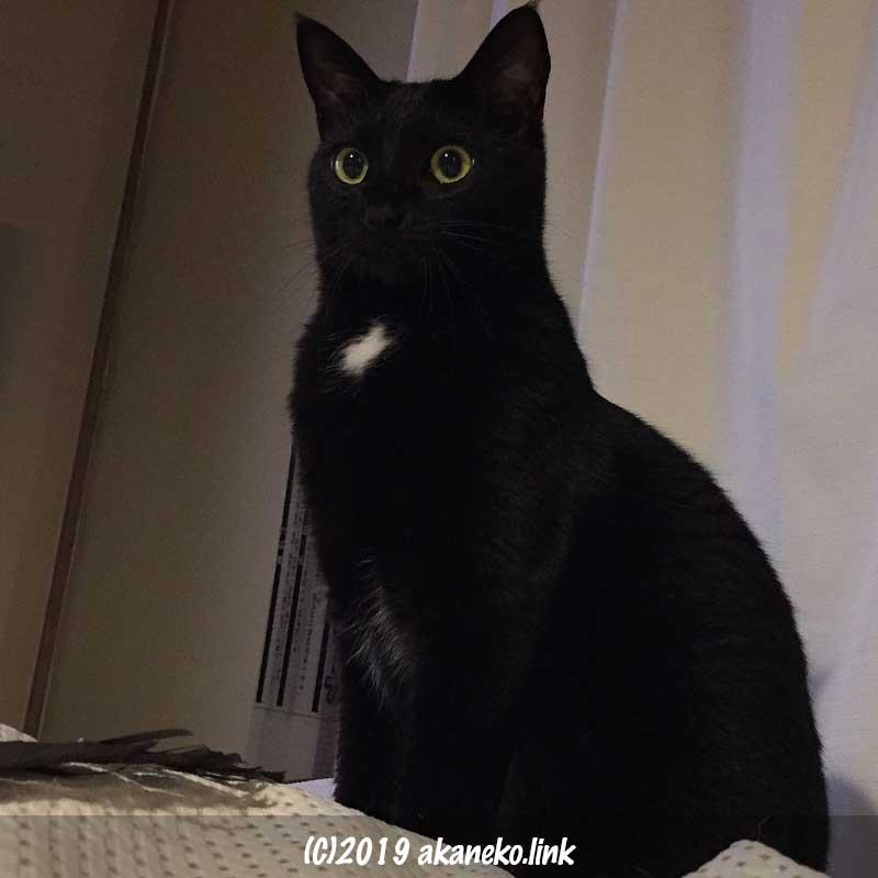 目をぱっちり開いて真面目な顔で座っている黒猫
