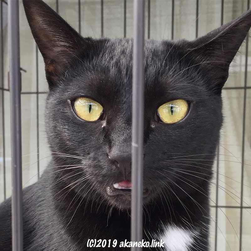 檻の向こうからカメラを見つめる黒猫