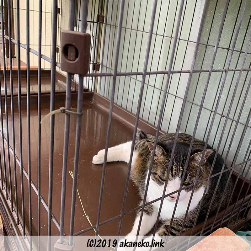 ケージの中からヨソ猫を見つめている猫