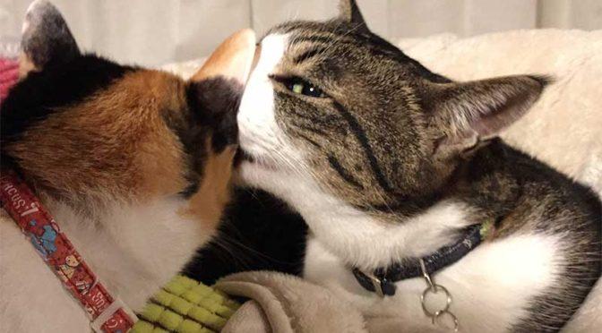 先住猫の絆:エドとみかん