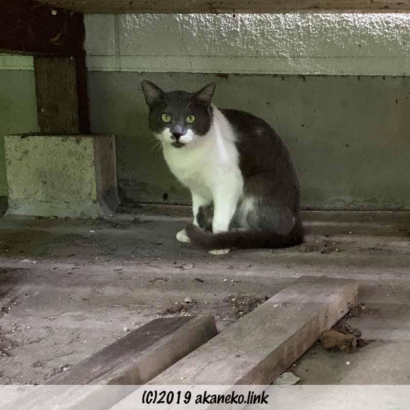 ウッドデッキの下に座ってこちらを見る猫