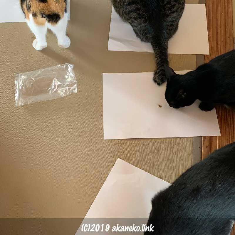 それぞれにまたたび粉をなめる猫たち